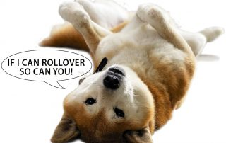 dog roll over 3 22 17
