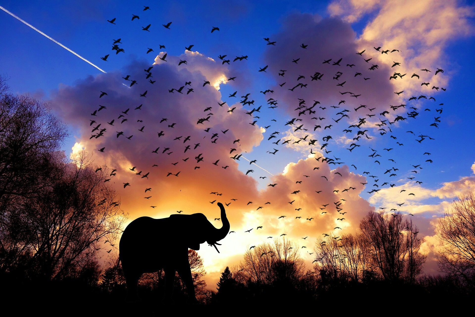 Sunset background, birds in flight, elephant in the foreground