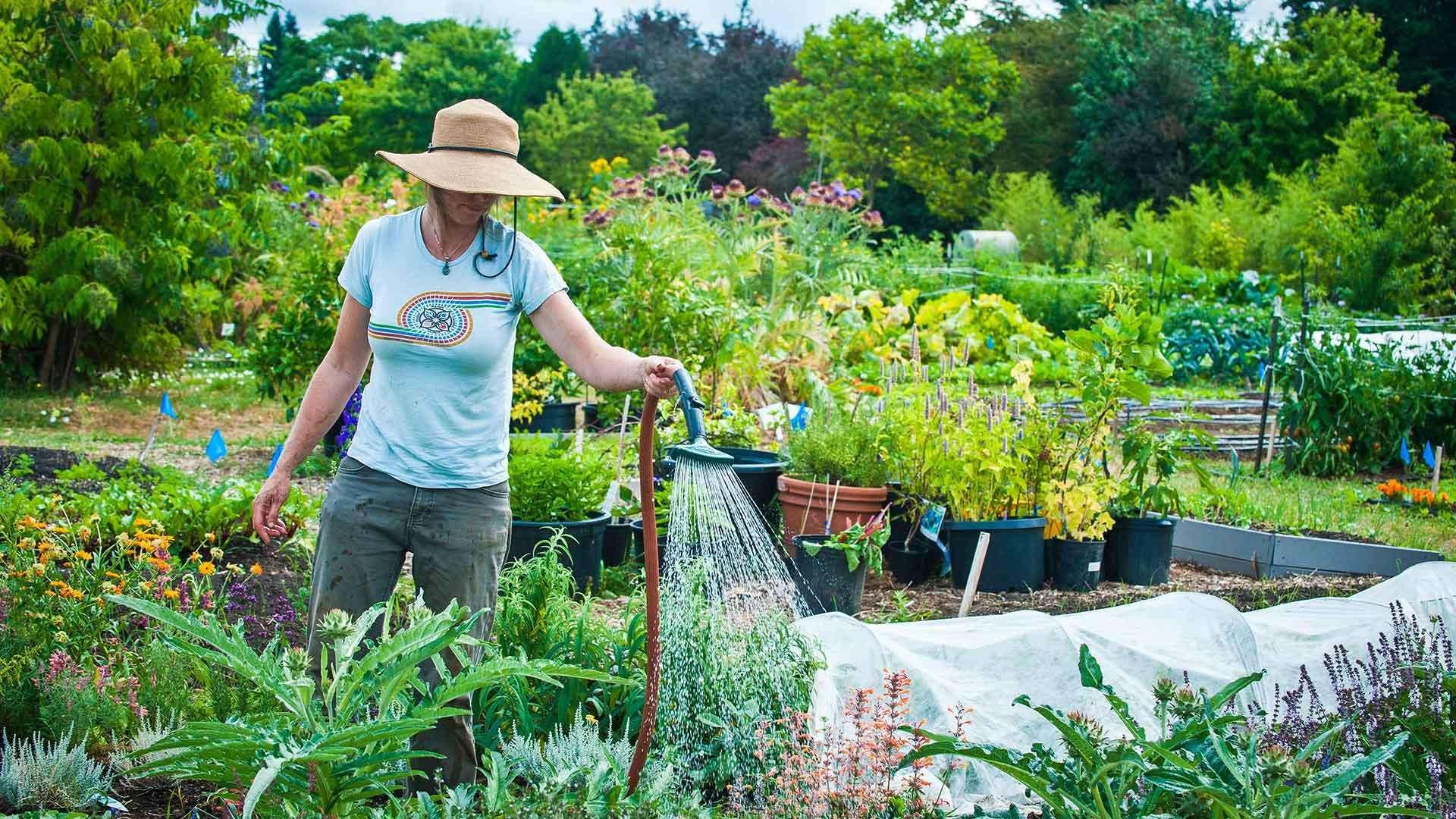 A woman in a hat watering plants in a garden