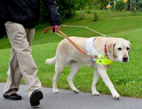 Braille Institute Coachella Valley Partners with Guide Dogs of the Desert