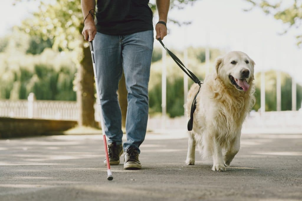 Man using white cane and walking with guide dog
